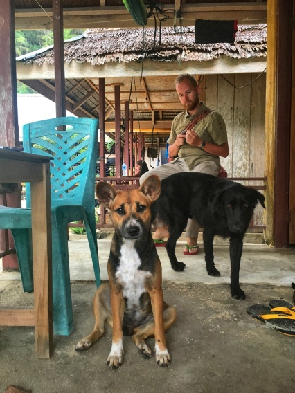 The island dogs: our regular companions – steadily seeking distraction and new adventures.