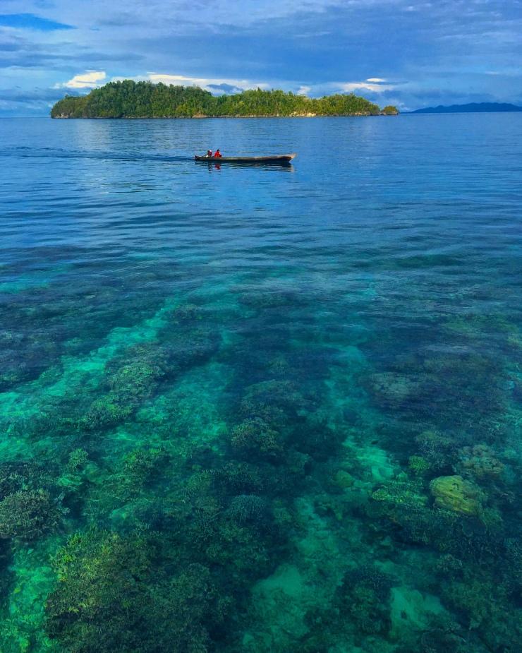 Corals calling!