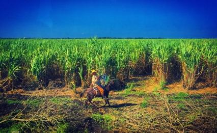 A real Cuban vaquero!